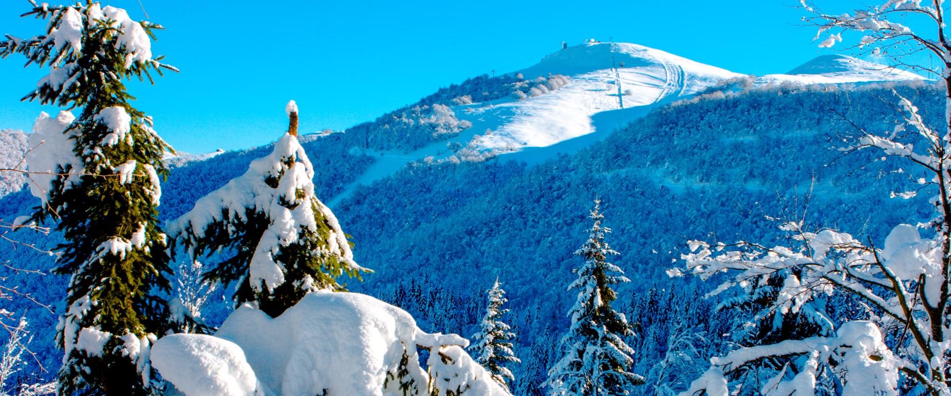 alberi neve 1920x800