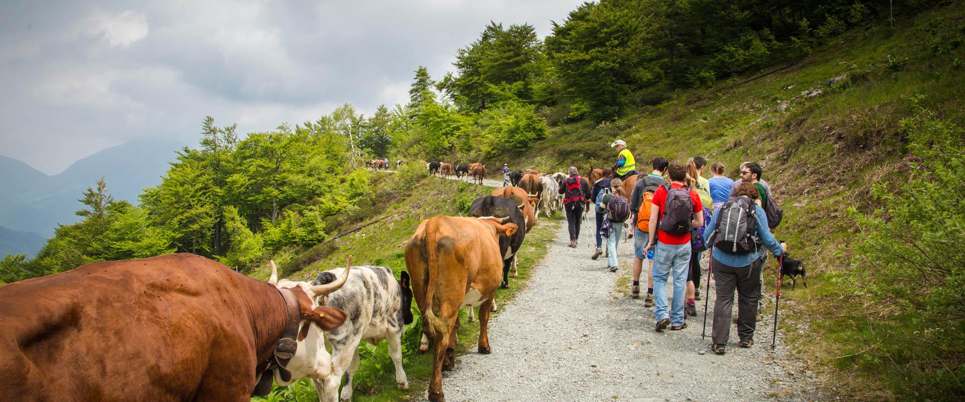 alpemoncerchio-trasumando-trekking