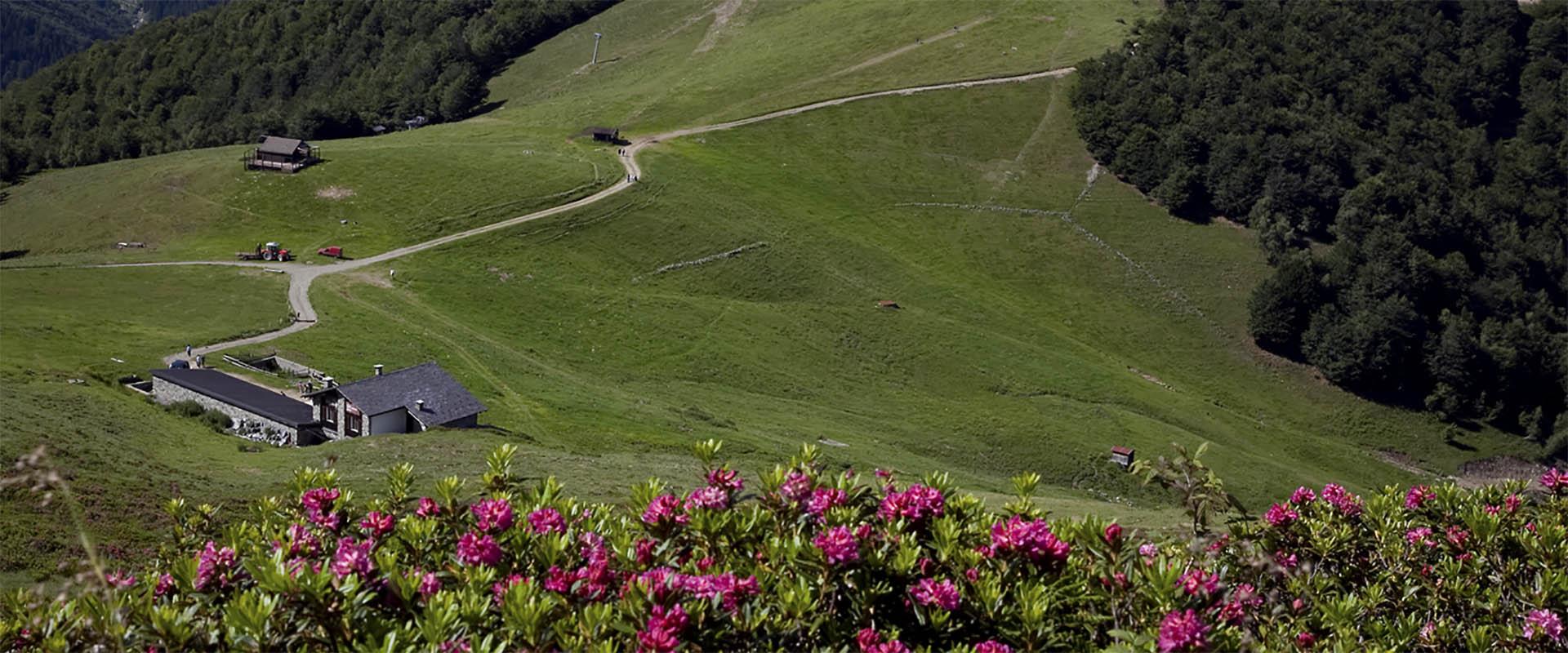alpemoncerchio-fiori-prati