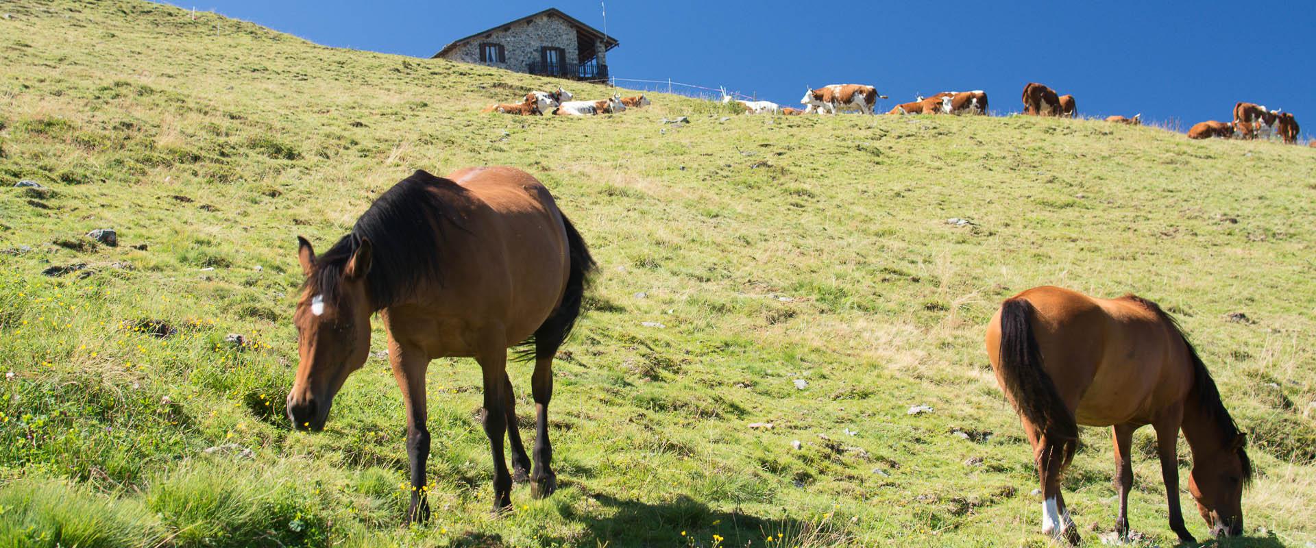 cavalli-spirit-viky-al-pascolo-agriturismo-alpemoncerchio