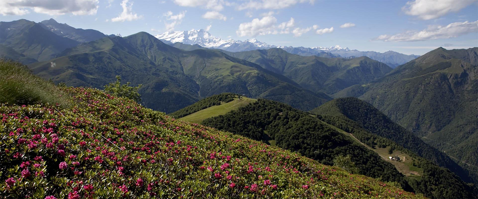 alpemoncerchio-fiori-montagne